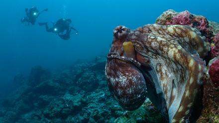 海平面下的精彩︰水底攝影「精讀班」!